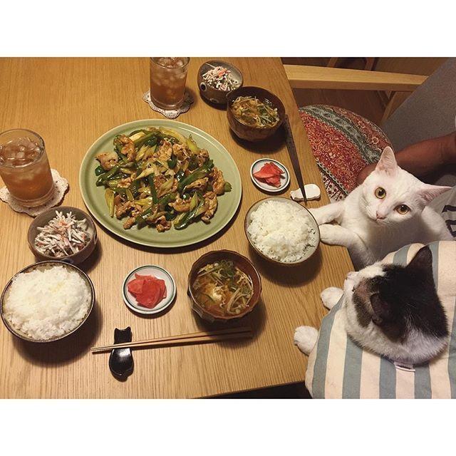 ご飯がすすむ系おかず♩ 豚こま、白ネギ、ピーマンのオイスターソースで中華炒め❤︎ 姪っ子ちゃんに、おめでとうコメントいっぱいありがとうございます✨後ほど、お返事させて頂いきます✨ #八おこめ #ねこ部 #cat #ねこ #八おこめ食べ物
