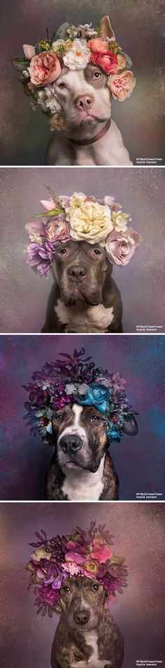 Check out these gorgeous fur-babies wearing floral crowns with afloral.com silk flowers! Amazing photo series by Sophie Gamand of pit bull-type dogs looking for homes to bring awareness to the poor treatment and prejudice against these beautiful dogs. Photos: Sophie Gamand