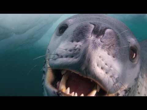 Such a lovely encounter with a Deadly Predator - YouTube