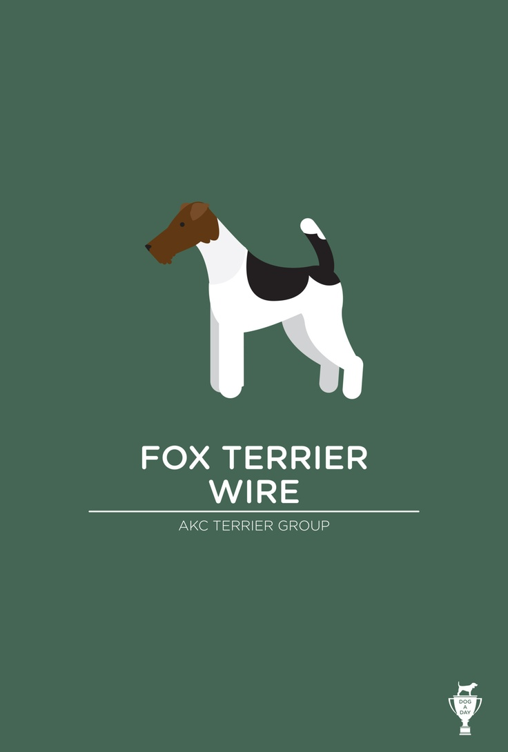 dogadayproject:  Fox Terrier Wire