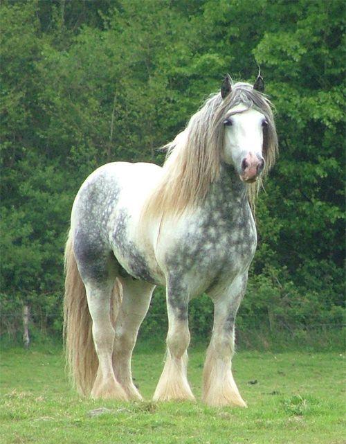 1060 best Draft Horses images on Pinterest | Horses, Big ...
