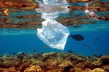Un Mundo en Paz: Plastisfera, el peligro de los residuos plásticos ...
