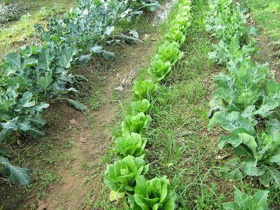 Σπορά φύτεμα καλλιέργεια λαχανικών