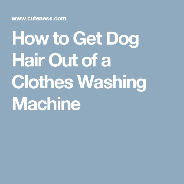 how to get rid of dog hair everywhere
