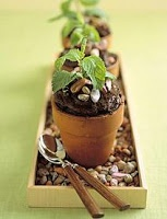 These are too adorable - chocolate cupcakes baked in terracotta pots, finished with chocolate rocks and a mint sprig.