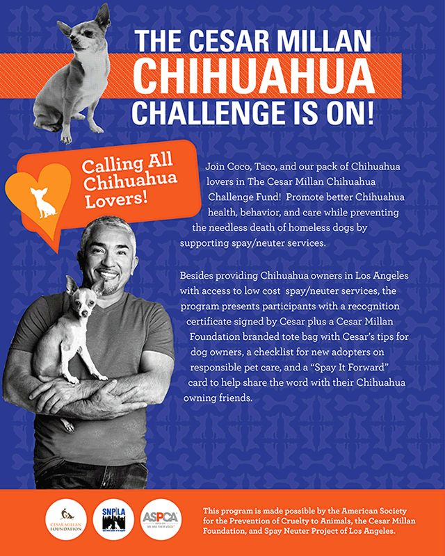 Donate to the Cesar Millan Chihuahua Challenge! #charity #awareness #dogs