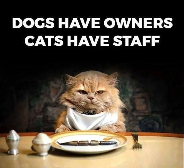 #cats ☺