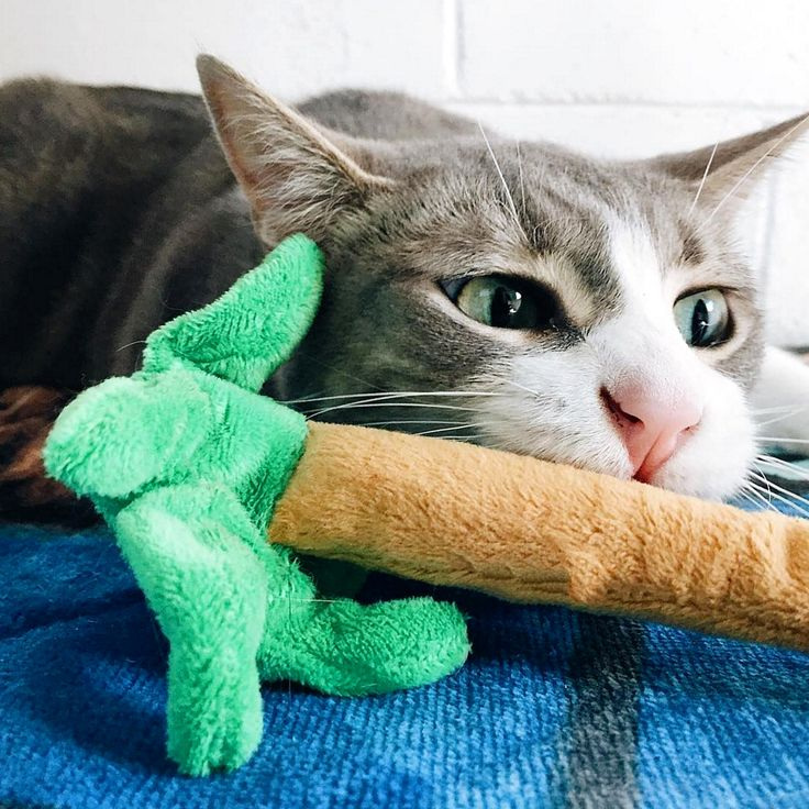 "Your kitties will feel like they are in purradise when they get to play with this tropical cat toy treat! Perfect size for kicking or hugging, and stuffed with strong, stinky catnip (just how they like it!).   Originally featured in the July 2016 ""Another Day in Purradise"" box."