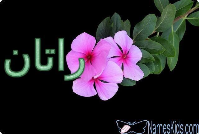 معنى اسم راتان وأصله Ratan Ratan Ratan اسم راتان اسم راتان بالانجليزية اسماء بنات Plants