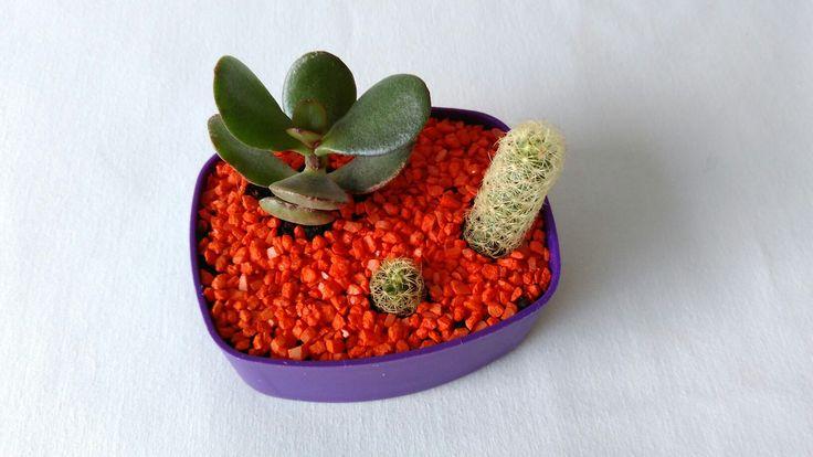 $10.000 Mini terrario en tapa de plástico con suculentas  (árbol de jade y cactus)