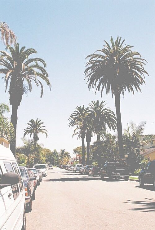 california Love Iphone Wallpaper : 17 Best images about Wallpapers on Pinterest iPhone backgrounds, california palm trees and ...