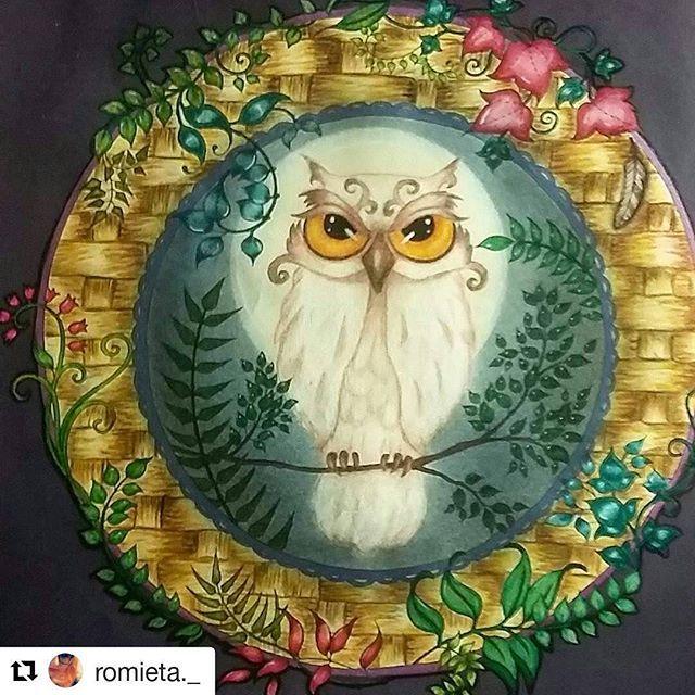 By Romieta With Terminado Talvez Faca Respingos No Fundo Owl DrawingsJoanna BasfordAdult ColoringColoring BooksColor