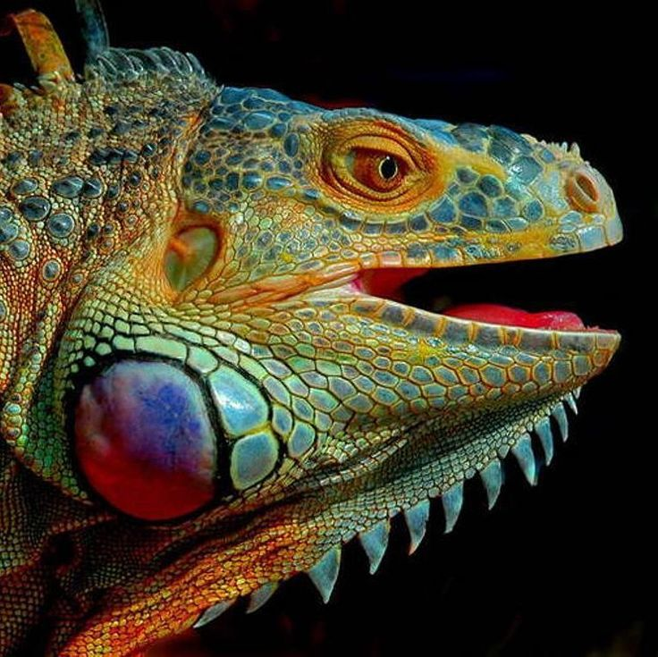 Best 25 Tropical Sculptures Ideas On Pinterest