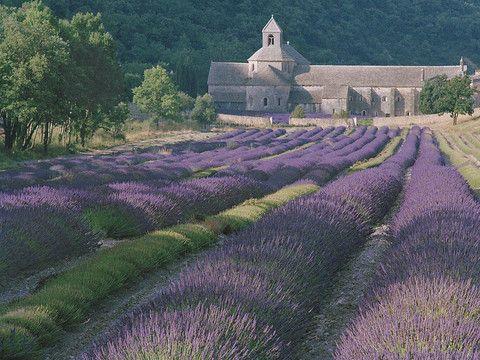 Lavender and Abbey- Senanque (Provence), France. Dennis Barloga Photography