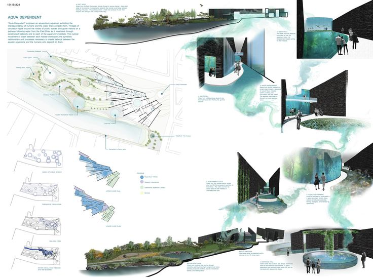 """ AQUA DEPENDENT "" - NYC Aquarium competition finalist"