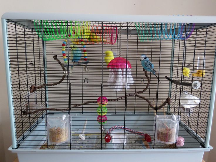 Great parakeet cage setup!