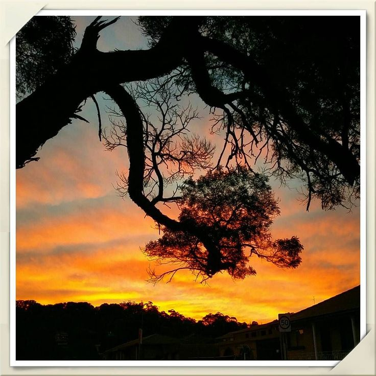 It was a good decision to not take the bus home today.. stopped and put the grocery bag down for a minute to take this beautiful sunset colours on the walk home   #sunset #skyscapes #clouds #silhouette #nature #wollongong #coniston #beautifulnature #myphotos #Webgrrl