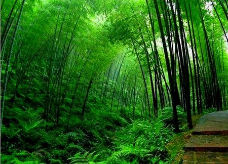 Down the dell, to protect from the lower house: black bamboo forest