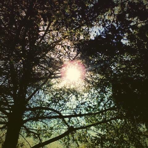 【bbkitc】さんのInstagramをピンしています。 《Morning air #morning #air #freshair #woods #wood #trees #tree #sunshine #bluesky #walking  #朝 #空気 #新鮮な空気 #木々 #木 #森 #太陽 #太陽の光 #青空 #散歩 #ウォーキング》