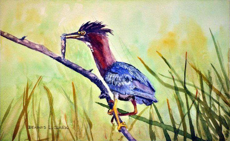In this class we will paint a heron that has just caught a fish.  During this lesson you will learn:  1  How to simplify the background 2  How to paint the foreground reeds 3  How to use the purple colour 4  How to simplify the feathers
