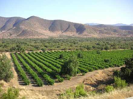Many of Chile's vineyards are found on flat land within the foothills of the Andes