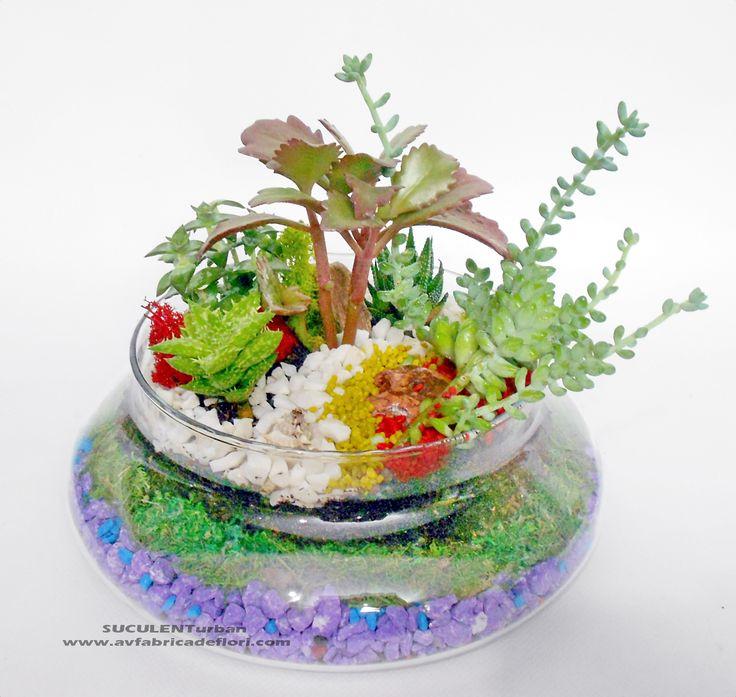 terariu cu plante suculente in vas de sticla rotund, muchi si piatra colorata (2)