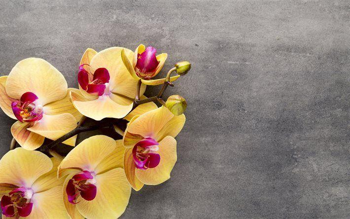 Scarica sfondi giallo orchidee, fiori tropicali, orchidee ramo, fiore giallo, orchidea
