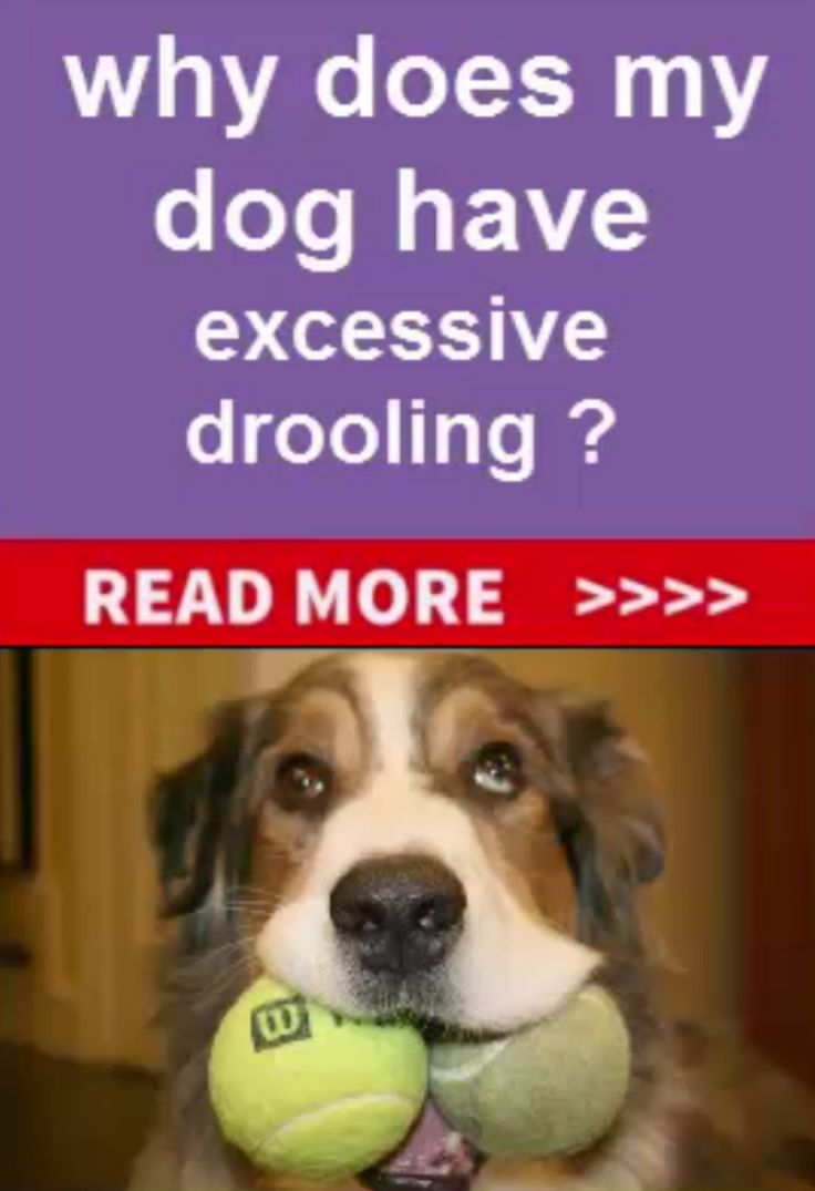 what would cause a dog to drool excessively