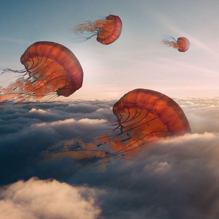 """""""Sky Jellyfish"""" Art Print by Ted Chin on Society6."""