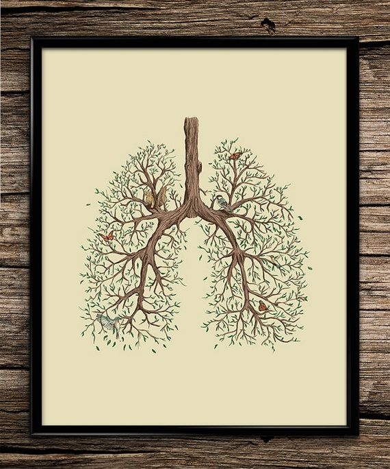 nature lung anatomy science prints anatomy print office decor home decor - Home Decor Art