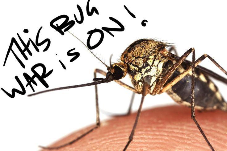 Mosquito Repellent Options