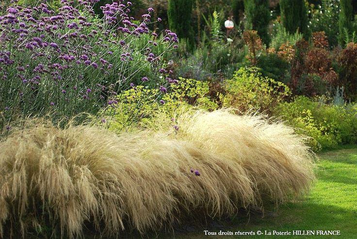 17 meilleures id es propos de arbuste ornemental sur for Arbre jardin contemporain