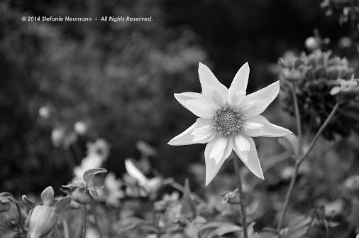 """Shining Star in Monochrome © Stefanie Neumann:  """"What if, just for one moment, we would strip away all the stories, and just be in the now? Who would each of us be?"""" -Stefanie Neumann  