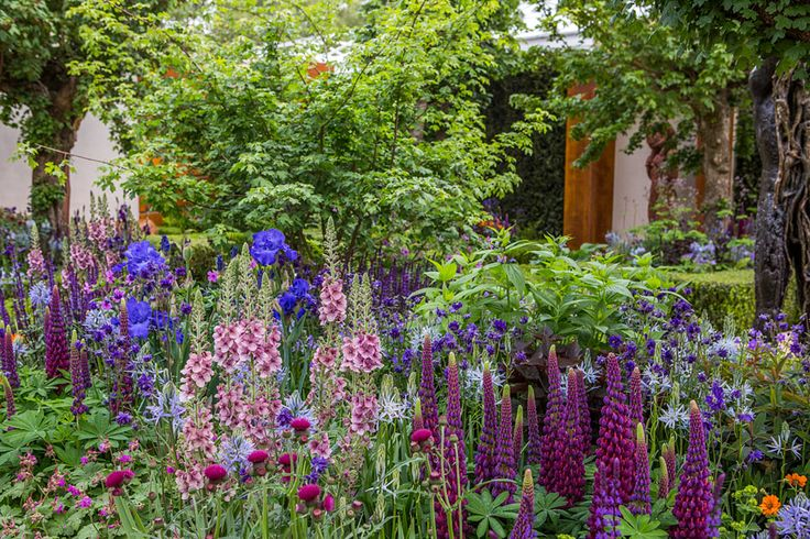 The Healthy Cities Garden at the Chelsea Flower Show 2015 / RHS Gardening