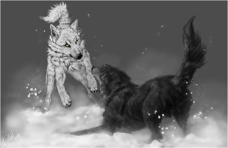 Wolf's Rain .:Kiba vs. Tsume:. by =WhiteSpiritWolf on deviantART