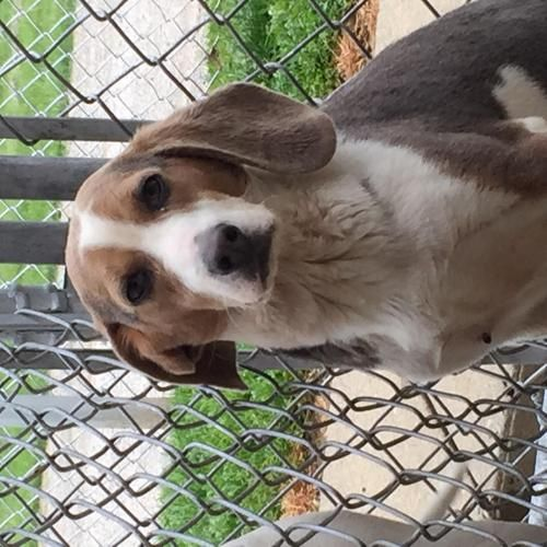 Available for a limited time from the Carroll County Dog Pound, 2185 Kensington Rd. NE, Route 9, Carrollton, Ohio 44615, 330-627-4244.Located southeast of the Akron/Canton area. The pound is open Monday-Friday, 7-4, except holidays. The adoption fee is $20 and includes the dog license, which will be mailed to you, and a 5-way shot.