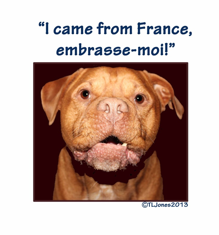 Emrasse-moi! or kiss me! One of the many gorgeous Dogue images available on merchandise. Check out my Facebook page www.facebook.com/pages/Ginger-Paws-Dogue-de-Bordeaux-Merchandise/579828198703832?sk=photos_albums