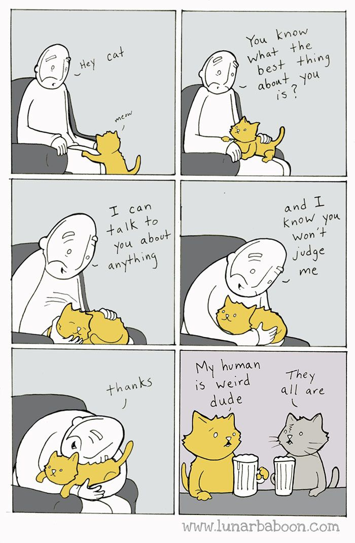 Life With Cats By Lunarbaboon (10+ Comics) | Bored Panda