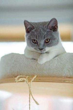 Cuteness Overload By Anastasia Cats Cute Cats Pretty Cats