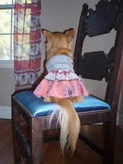 Sew DoggyStyle: Doggy Style on a Ruff Budget! DIY Dog Clothes