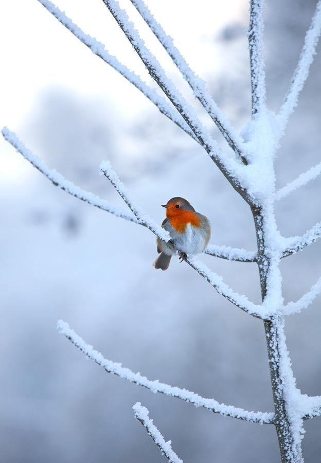 In de winter op een boom