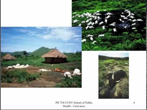 Aug 21, 1986 LAKE NYOS (1986) OVERVIEW. At 9:30 p.m. on August 21, 1986, a cloudy mixture of carbon dioxide (CO2) and water droplets rose violently from Lake Nyos, Cameroon. Lake Nyos Disaster in Camaroon Africa (Caravanos)