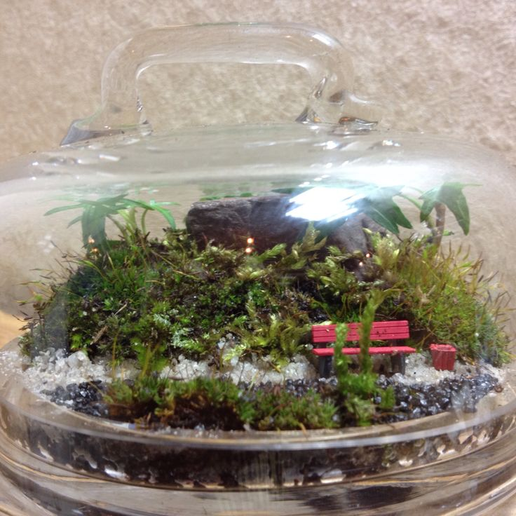 #terrarium#park#inglass#nature#scenery#