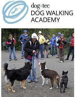 dog walking certification