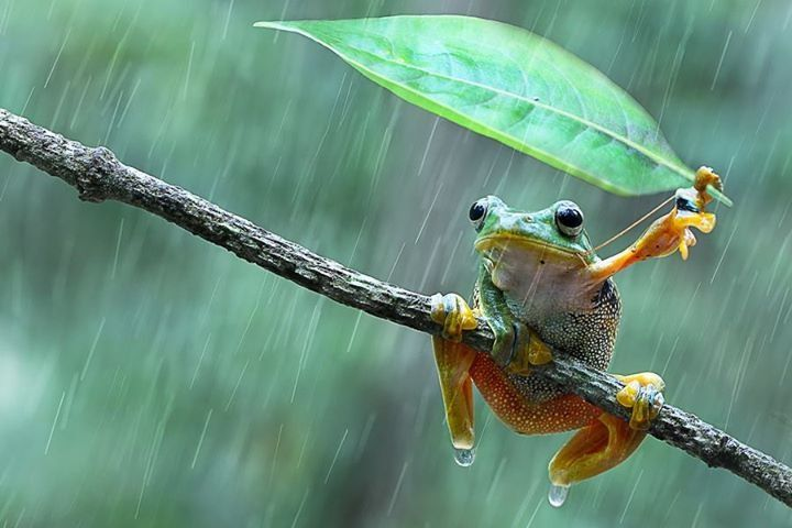 In The Rain by nur santo on 500px