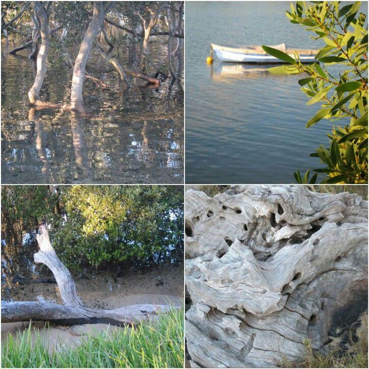 Minnamurra river
