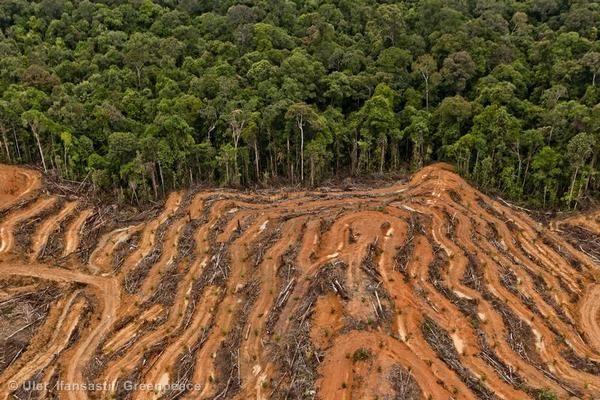 Deforestation_3.jpg (600×400)