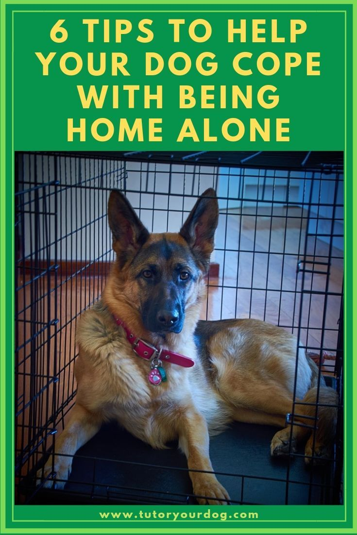 While You Are Out 6 Tips For Leaving Your Dog Home Alone Dog
