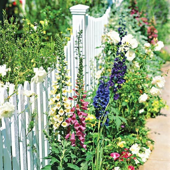 Picket Garden Fence... narrow plants such as these pink and white foxglove, purple delphinium, and a climbing rose to attach to the fence
