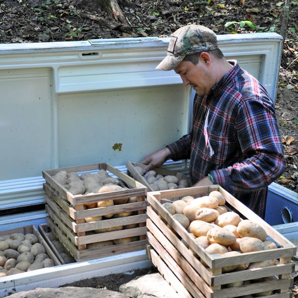 "Filling up the ""root cellar"". old fridge buried in the ground."